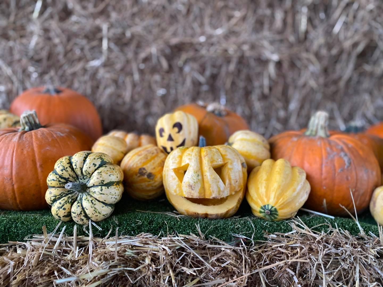Pumpkin Lantern collection
